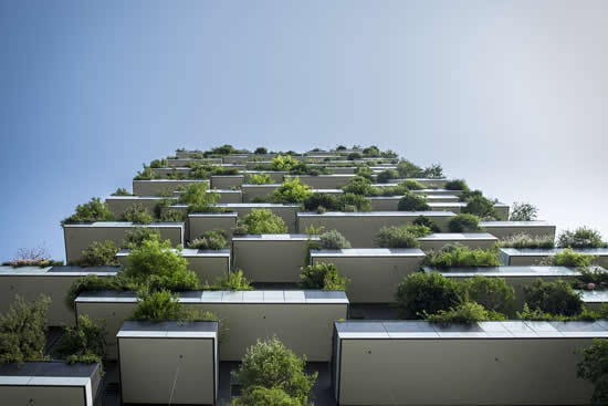 Vertical forest - tree planted in high-rise flats and offices